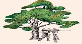 au coeur de arbre agnes news